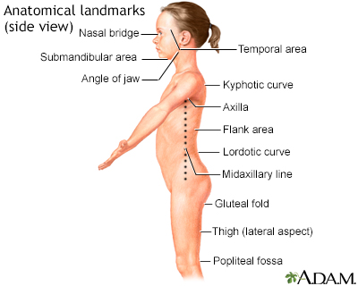Anatomical landmarks, side view